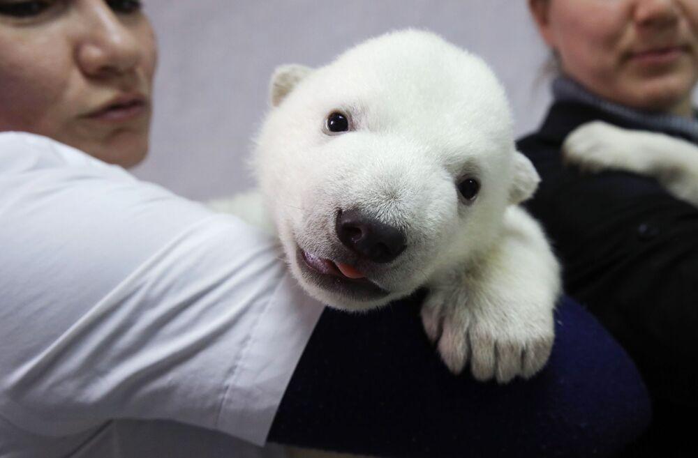 Mládě ledního medvěda v safari parku Gelendžika
