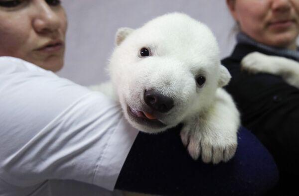 Mládě ledního medvěda v safari parku Gelendžika. - Sputnik Česká republika