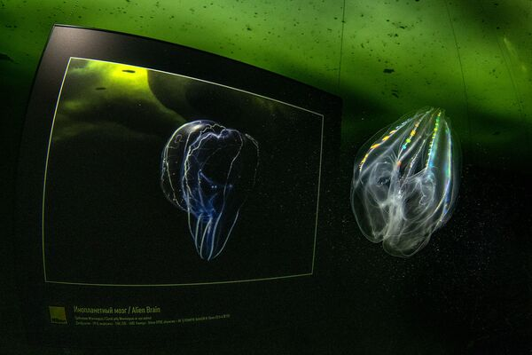 První výstava pod ledem na světě v Bílém moři za polárním kruhem - Sputnik Česká republika