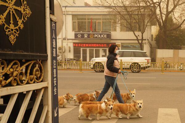Dívka se psy během písečné bouře v Pekingu.  - Sputnik Česká republika