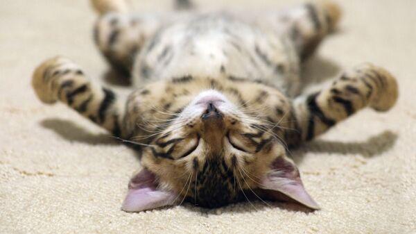 Spící kotě - Sputnik Česká republika