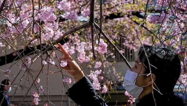 Pomíjivá krása. V Japonsku kvetou první sakury, ne každý ji však může obdivovat - Sputnik Česká republika