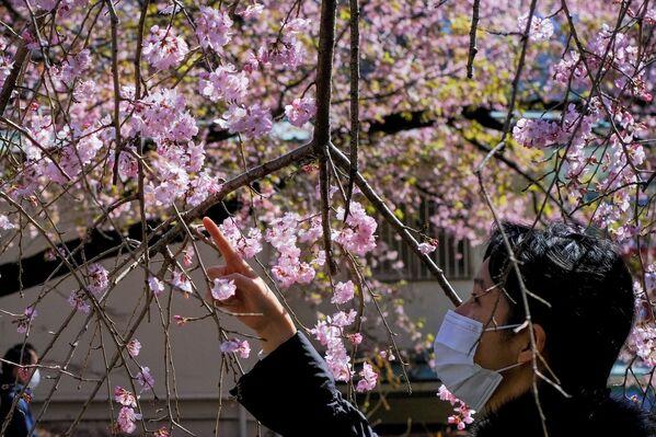 Dívka obdivující kvetoucí třešně v Tokiu. - Sputnik Česká republika