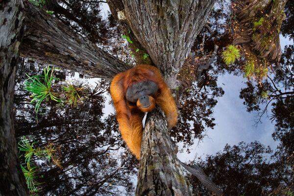 Snímek The World Is Going Upside Down kanadského fotografa Thomase Vijayana. Vítěz v kategorii Zvířata v jejich prostředí a vítěz soutěže World Nature Photography Awards 2020. - Sputnik Česká republika