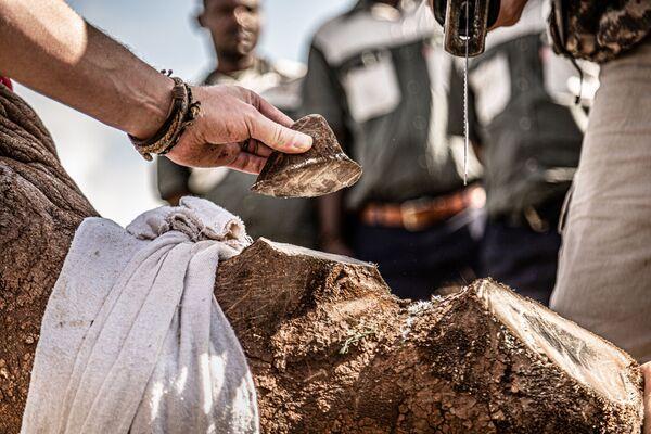 Snímek 21st century rhino conservation belgického fotografa Gunthera De Bruyneho. Vítěz v kategorii Fotoreportáž z přírody soutěže World Nature Photography Awards 2020. - Sputnik Česká republika