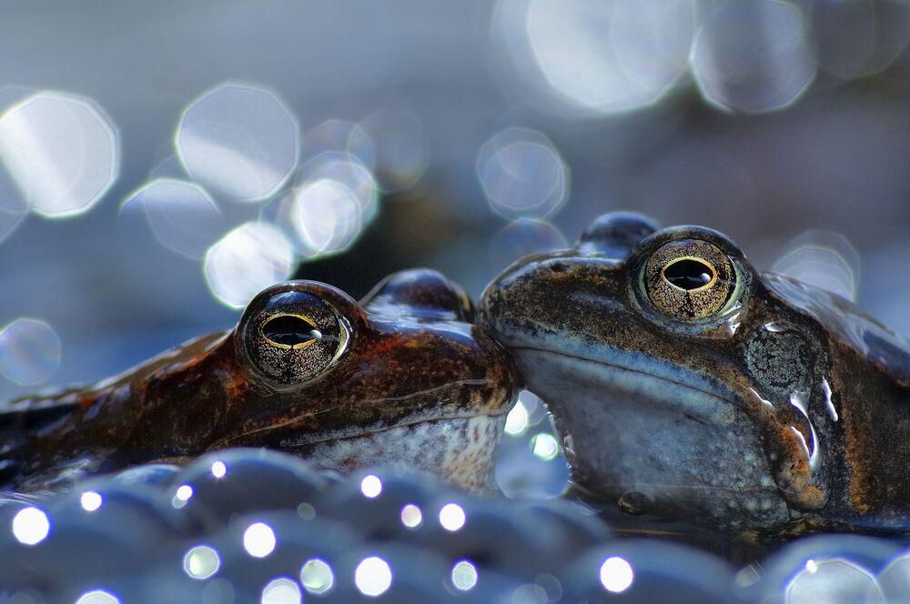 Svět se obrátil vzhůru nohama! Soutěž World Nature Photography Awards 2020 vyhlásila vítěze, je mezi nimi i Čech