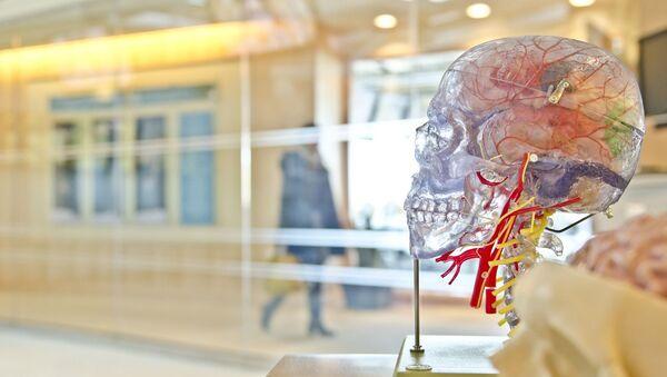Anatomický model lidské lebky - Sputnik Česká republika