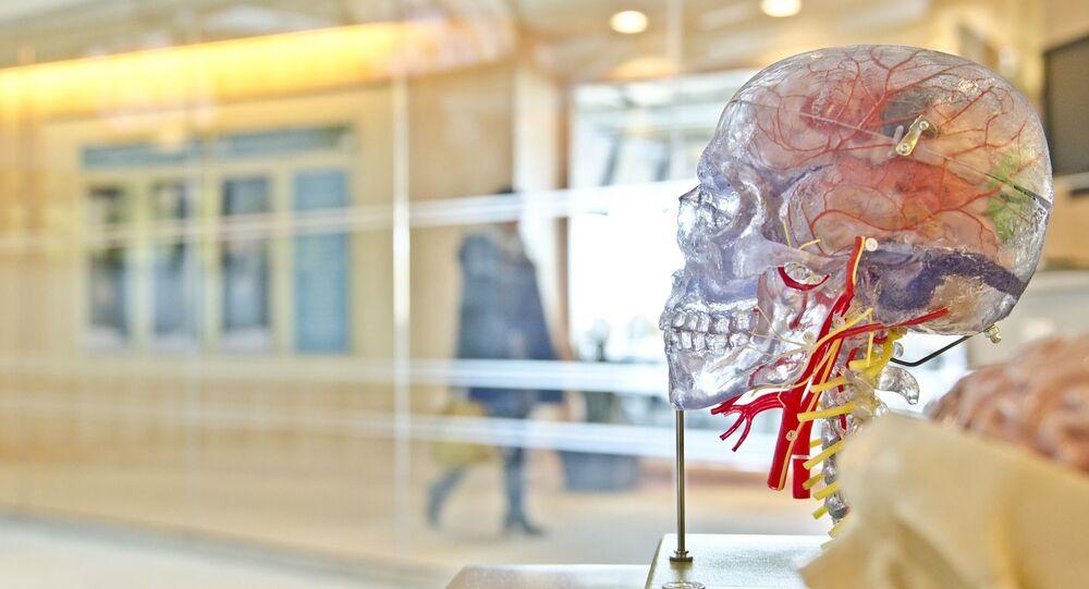 Anatomický model lidské lebky