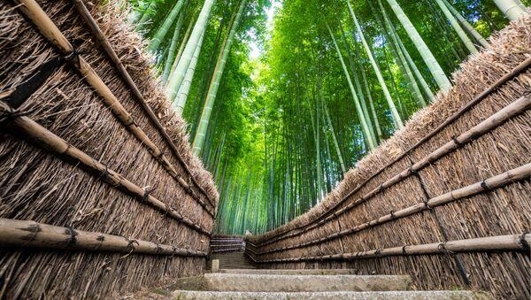 Bambusový les Arashiyama v Japonsku. - Sputnik Česká republika