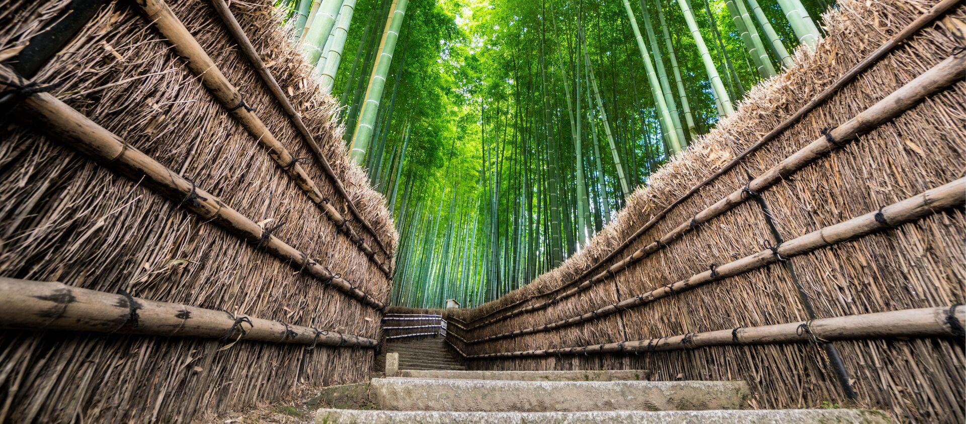 Bambusový les Arashiyama v Japonsku. - Sputnik Česká republika, 1920, 27.03.2021