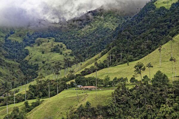 Jeden z nejznámějších treků Kolumbie Cocora Valley. - Sputnik Česká republika