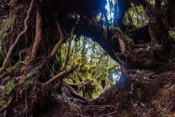 Přírodní rezervace Mossy Forest v Malajsii.  - Sputnik Česká republika