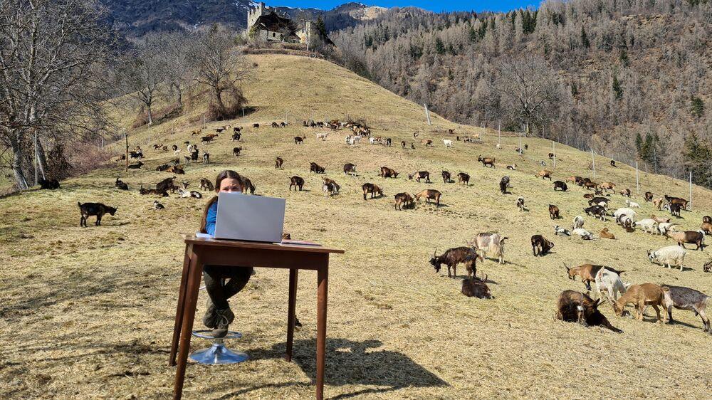 Desetiletá Fiammetta během online hodiny mezi kozami svého pastýřského otce na pastvině v Caldese, Itálie.