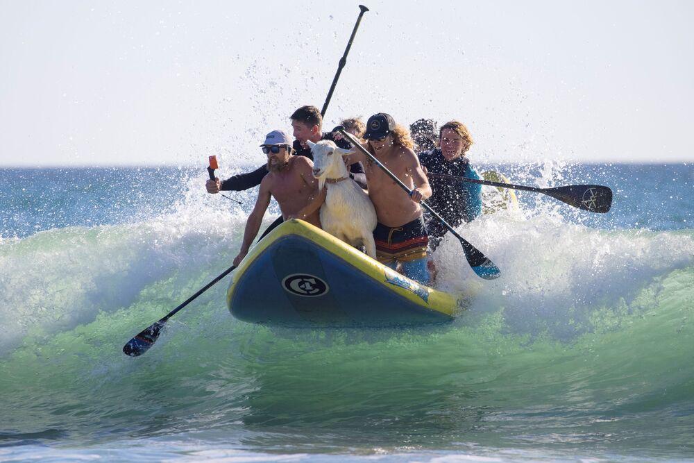 Surfování s kozou v San Clementu, Kalifornie.