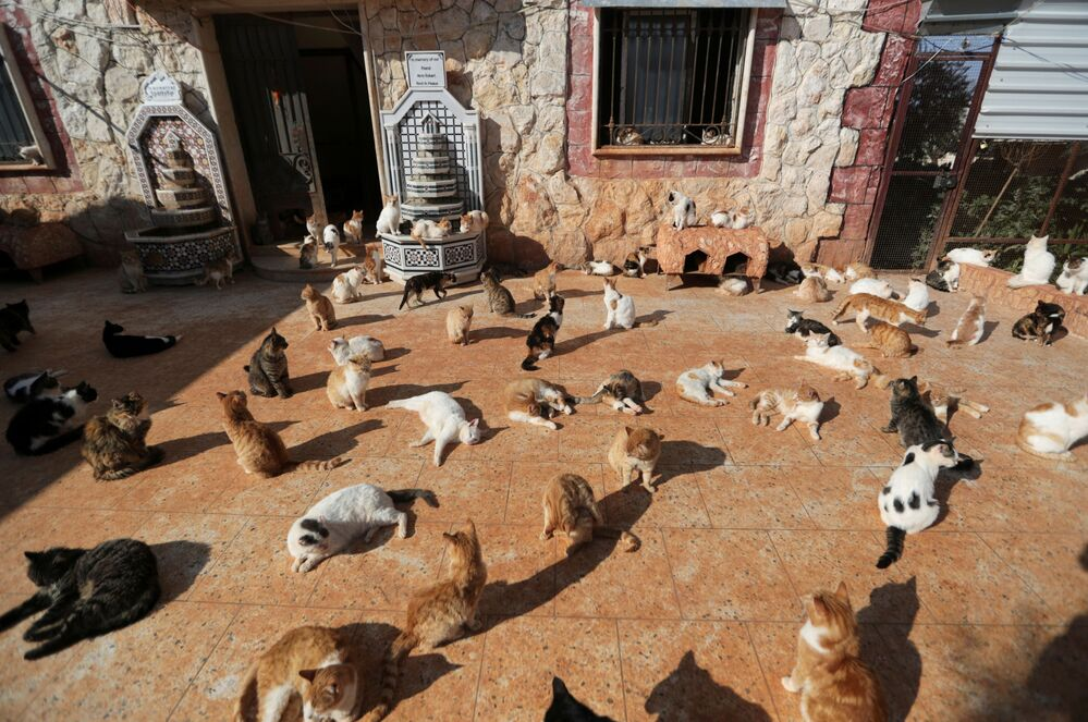 Útulek pro kočky v Sýrii