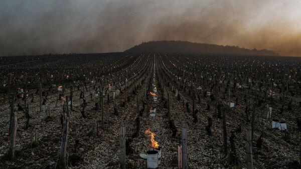 Kvůli silným mrazům zapálili místní farmáři více než 2 000 speciálních svíček – sudů naplněných hořícím parafínem, aby réva nezmrzla - Sputnik Česká republika