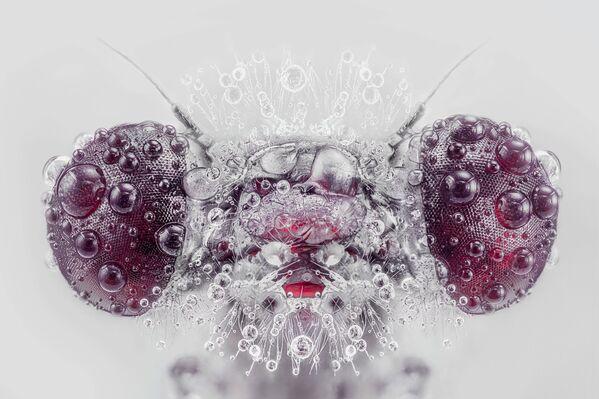 Detailní portrét fialově zbarveného vrhače (Trithemis annulata). - Sputnik Česká republika
