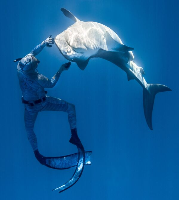 Francouzský potápěč Pierrick Seybald se žralokem ve vodách severně od Tahiti ve Francouzské Polynésii - Sputnik Česká republika