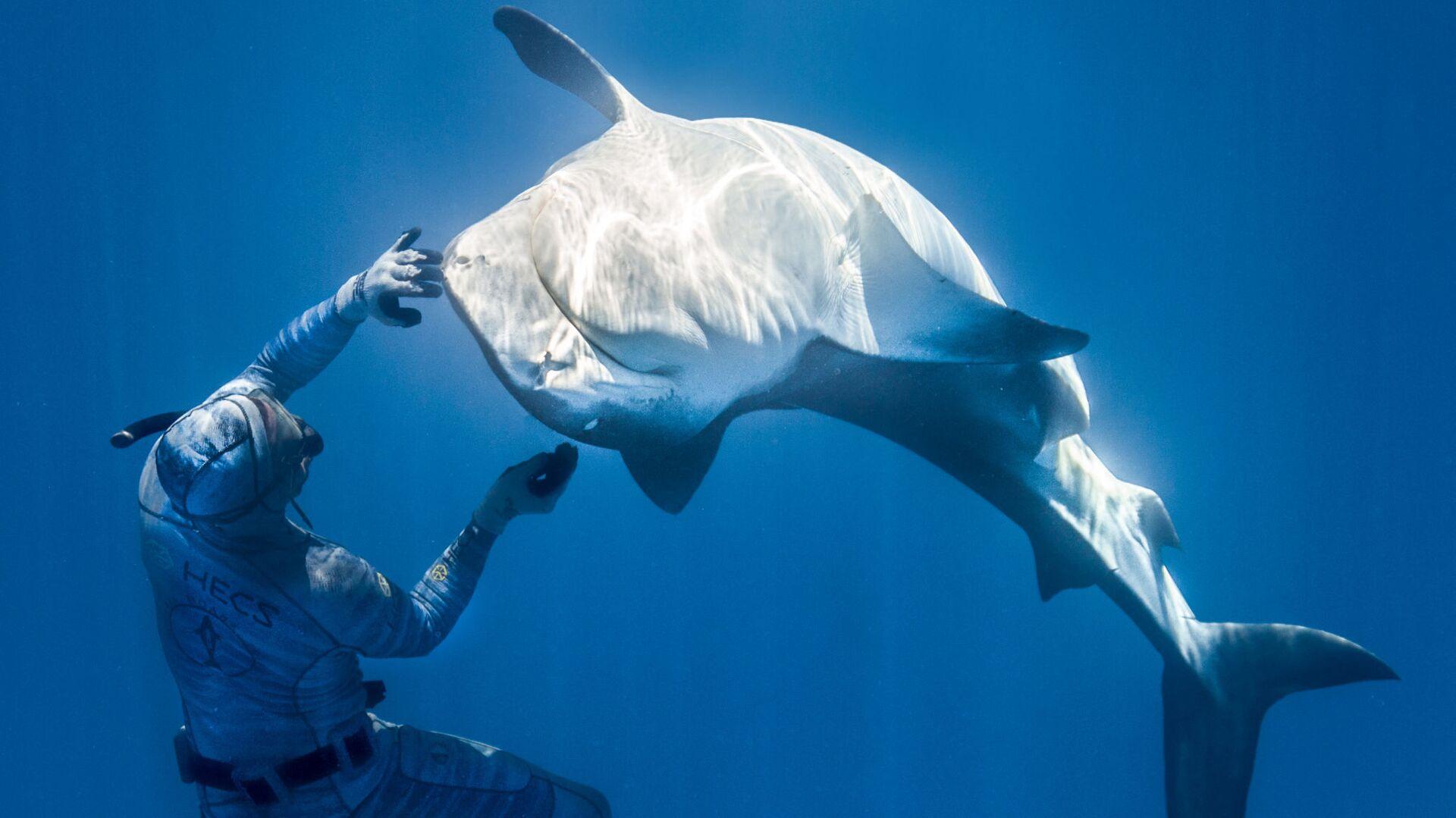 Французский фридайвер Пьеррик Зейбальд, взаимодействующий с акулой в водах Французской Полинезии - Sputnik Česká republika, 1920, 22.04.2021
