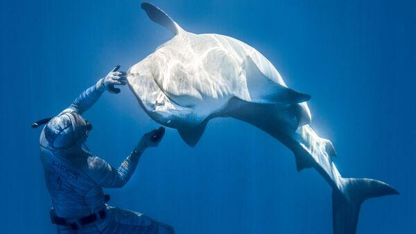 Французский фридайвер Пьеррик Зейбальд, взаимодействующий с акулой в водах Французской Полинезии - Sputnik Česká republika