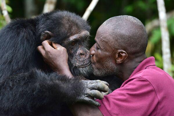 Pečovatel Germain Djenemaya Koidja se svým svěřencem Ponsem - jediným žijícím šimpanzem z kolonie 20 opic, na ostrově Chimpanzee u města Grand Lahou. Ze skupiny šimpanzů, které výzkumná laboratoř v roce 1983 přemístila z Libérie na malý ostrov za účelem lékařských testů, zůstal pouze Ponso. Nyní se lidé snaží udržet Ponsa naživu, neboť se populace opic za pouhá dvě desetiletí propadla v západoafrické zemi o 90 procent.  - Sputnik Česká republika