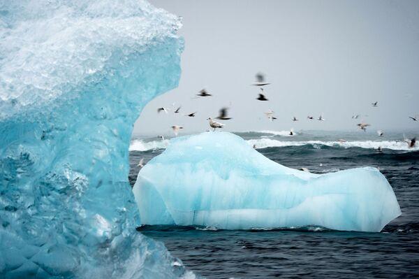 Rackové létají kolem ledovců v laguně Jokulsarlon na Islandu - Sputnik Česká republika
