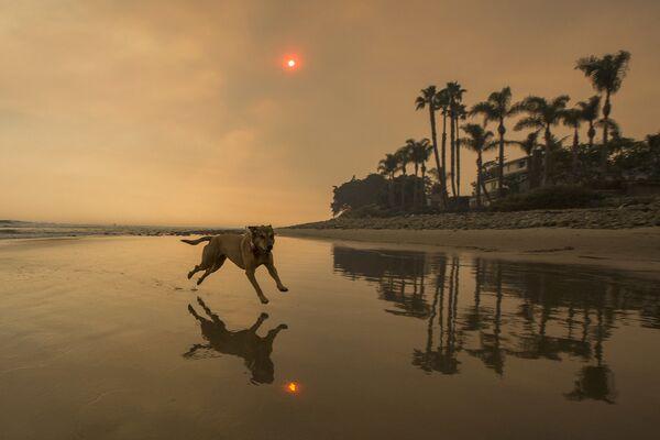 Pes běží po pláži v Kalifornii  - Sputnik Česká republika
