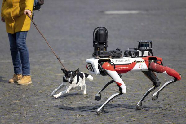 Pes štěká na robota Spot v německém Erfurtu - Sputnik Česká republika