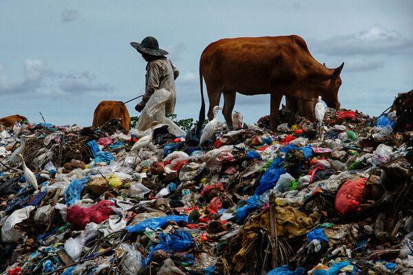 Pastýř pase krávy na skládce, která vznikla po svátku Íd al-fitr, Indonésie - Sputnik Česká republika