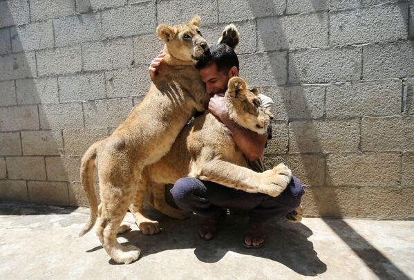 Muž si hraje se lvy. Pásmo Gazy. - Sputnik Česká republika