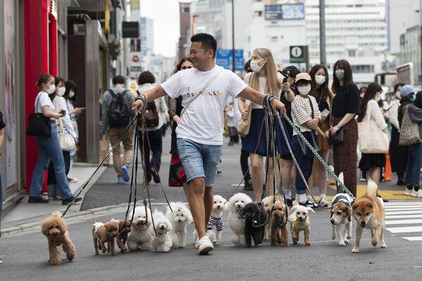 Muž jde se psy v Tokiu - Sputnik Česká republika