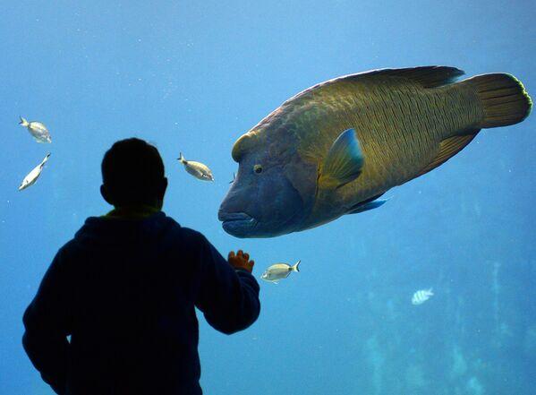 Člověk sleduje ryby v nově otevřené Zoologické zahradě ve Vratislavi, Polsko. - Sputnik Česká republika
