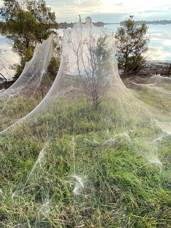 Očekává se, že tyto křehké pavučiny se rozpadnou koncem týdne. - Sputnik Česká republika