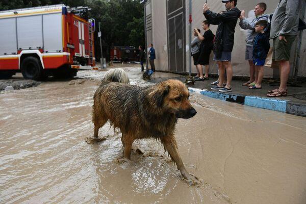 Pes na jedné z ulic Jalty, kterou zasáhly silné deště.   - Sputnik Česká republika