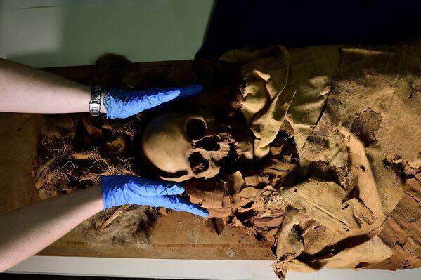 Příprava mumie k přepravě z Archeologického muzea v Bergamu do milánské nemocnice k provedení tomografie - Sputnik Česká republika
