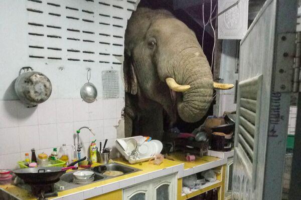 Slon prorazil zeď činžovního domu v Thajsku - Sputnik Česká republika