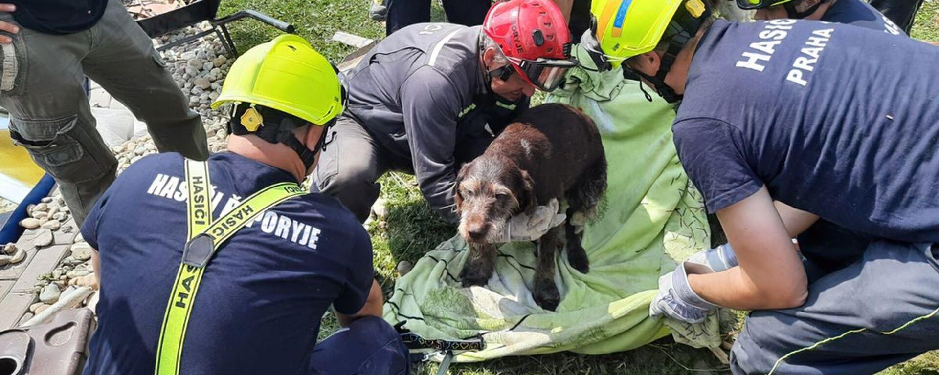 Hasiči ze sutin po tornádu na Moravě vyprostili psa - Sputnik Česká republika, 1920, 03.07.2021