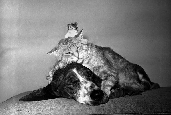 Když se řekne, že žijí jako pes a kočka, tak se všem vybaví ledacos, jenom ne to, co vidíme na této fotografii. Kočka, pes a křeček žijí v harmonii. Snímek byl pořízen 1. května 1961 v Kalifornii. - Sputnik Česká republika