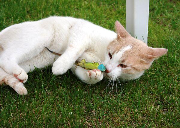 Na posledním snímku máme bílou kočku se zelenou ještěrkou. - Sputnik Česká republika