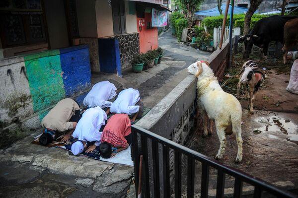 Modlitba indonéských muslimů během Svátku oběti ve městě Bandung, provincie Západní Jáva. - Sputnik Česká republika