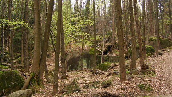Буковые лесоа в Йизерских горах в Чехии - Sputnik Česká republika