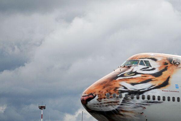 Boeing 747-400 společnosti Rossiya v tygřím zbarvení - Sputnik Česká republika