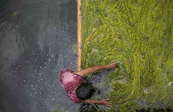 Dělník čistí jezero Kamal Pokhari od řas v Káthmándú, Nepál. - Sputnik Česká republika