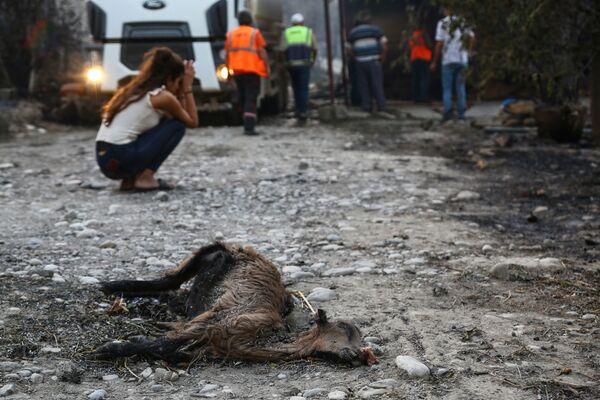 Dívka u uhynulého zvířete v Turecku - Sputnik Česká republika