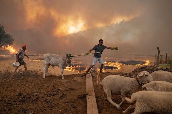 Muži s hospodářskými zvířaty při požárech v Turecku - Sputnik Česká republika