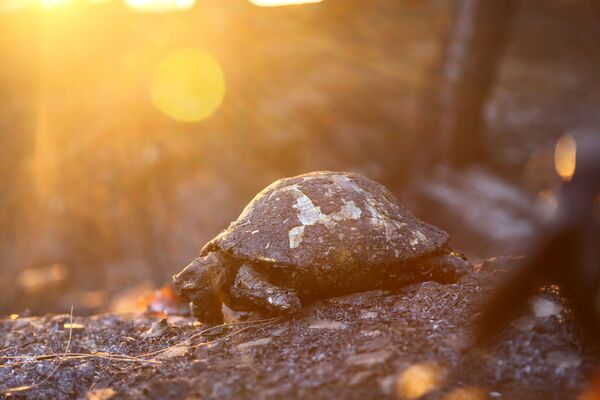 Ostatky shořelé želvy v Turecku - Sputnik Česká republika