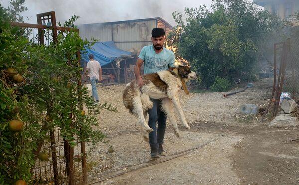 Спасение собаки во время природных пожаров в Турции - Sputnik Česká republika