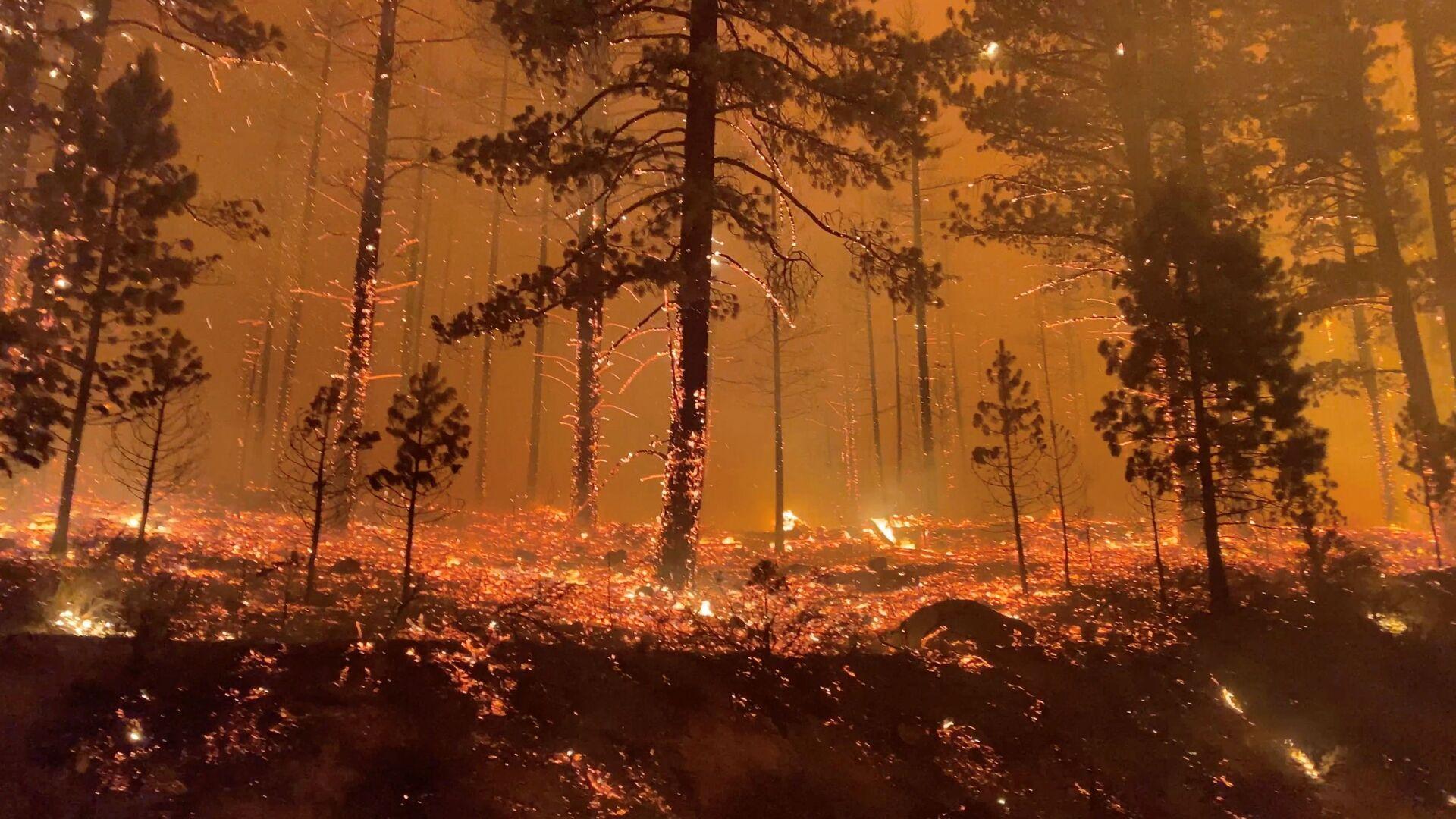 Горящий лес в Калифорнии, США - Sputnik Česká republika, 1920, 09.08.2021
