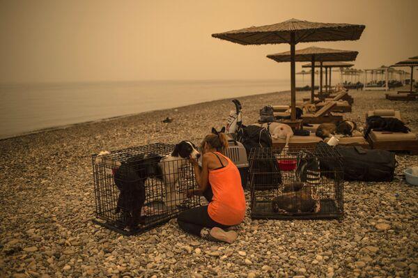 Žena pomáhá psovi během požárů na řeckém ostrově Evia, 9. srpna 2021. - Sputnik Česká republika
