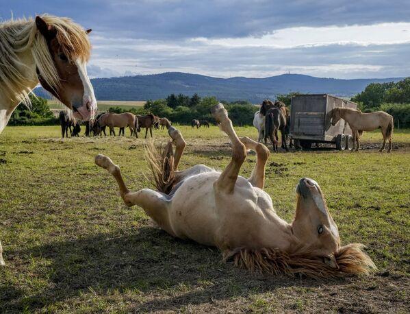 Koně si hrají ve výběhu nedaleko Frankfurtu v Německu. - Sputnik Česká republika